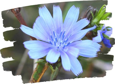 Catalogue Fleurs de Bach